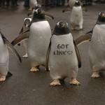 نکاتی درباره الگوریتم جدید پنگوئن گوگل 3