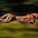 فاکتورهای رنکینگ گوگل – قسمت دهم: سرعت بارگذاری سایت
