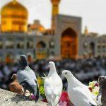 راهنمای فوق العاده برای انتخاب تور مشهد